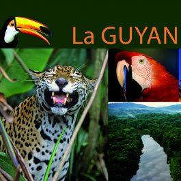 365 GUYANE 1 265x265 - La Guyane en 365 photos