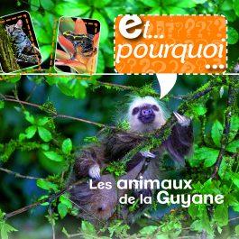 Et pourquoi ? – Les animaux de la Guyane