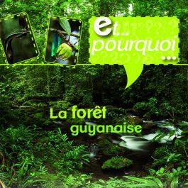 ET POURQUOI FORET 265x265 - Et pourquoi ? - La forêt guyanaise