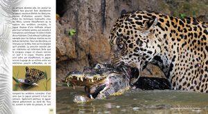 Rencontre avec le jaguar 6 300x165 - Rencontre avec le jaguar