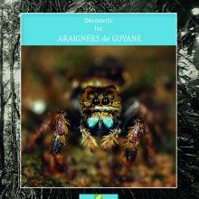 decouvrir araignees guyane 220x220 - Découvrir les araignées de Guyane