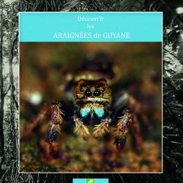 decouvrir araignees guyane 265x265 - Découvrir les araignées de Guyane