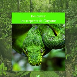 Découvrir les serpents de Guyane