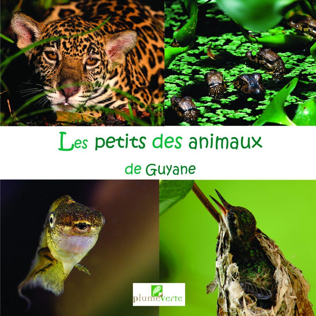 Les petits des animaux de Guyane_couv.indd