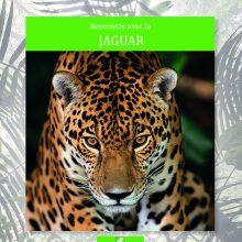rencontre jaguar 220x220 - Rencontre avec le jaguar