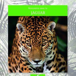 Rencontre avec le jaguar