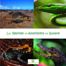 Mini-imagier : Les reptiles et amphibiens de Guyane