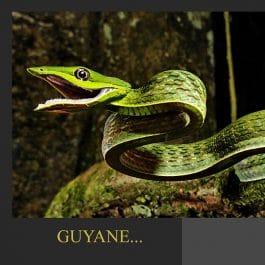 AQUA CP GX1 265x265 - Carte postale Serpent liane