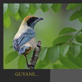 AQUA CP GY1 265x265 - Carte postale Tangara