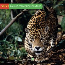Calendrier 2020 TM